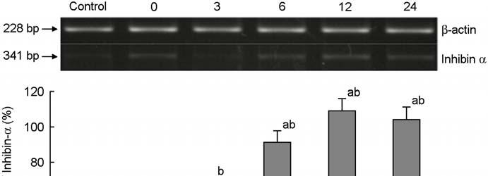 Figure 2. Electrophoretogram and its densitogram of RT-PCR products for inhibin-α mrna in the control and γ-irradiated mouse ovaries.