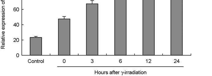 05 significantly higher than 0 hours post irradiation. b, p<0.01 significantly higher than normal control. Figure 3.