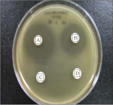 ü ³ e w 677 Fig. 3. Antimicrbial activities f Schizandra chinensis extracts against Eubacterium limsum. A, S. chinensis 80% ethanl extract; B, S.