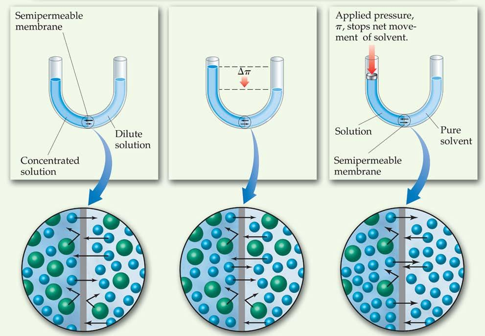 Osmosis In osmosis, there is net movement of