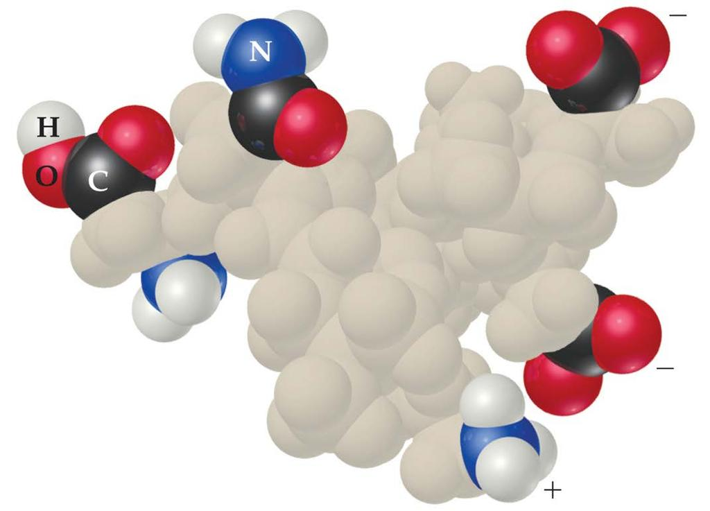 Colloids in Biological Systems Some molecules have a polar,