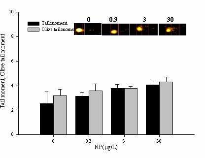 Fig.5. DNA damage in C.tentans for 24hr(a) and DNA damage in C.riparius for 24hr(b). Tail moment and Olive tail moment were measured by comet assay (n=3, mean ±SEM p < 0.05).