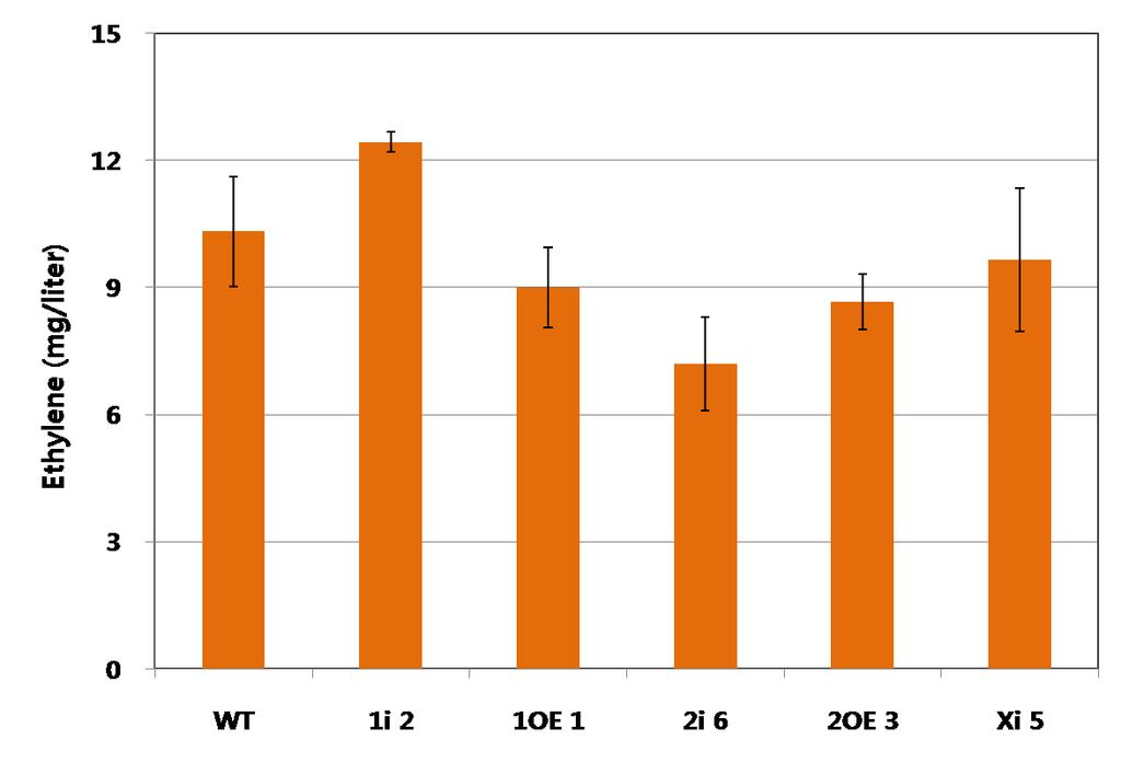 Figure 23. Comparison of the ethylene contents in transgenic plants (35DAP) transformed by Myb1 (1i2 and 1OE1), Myb2 (2i6 and 2OE3) and CmXET (Xi5) during fruit ripening.
